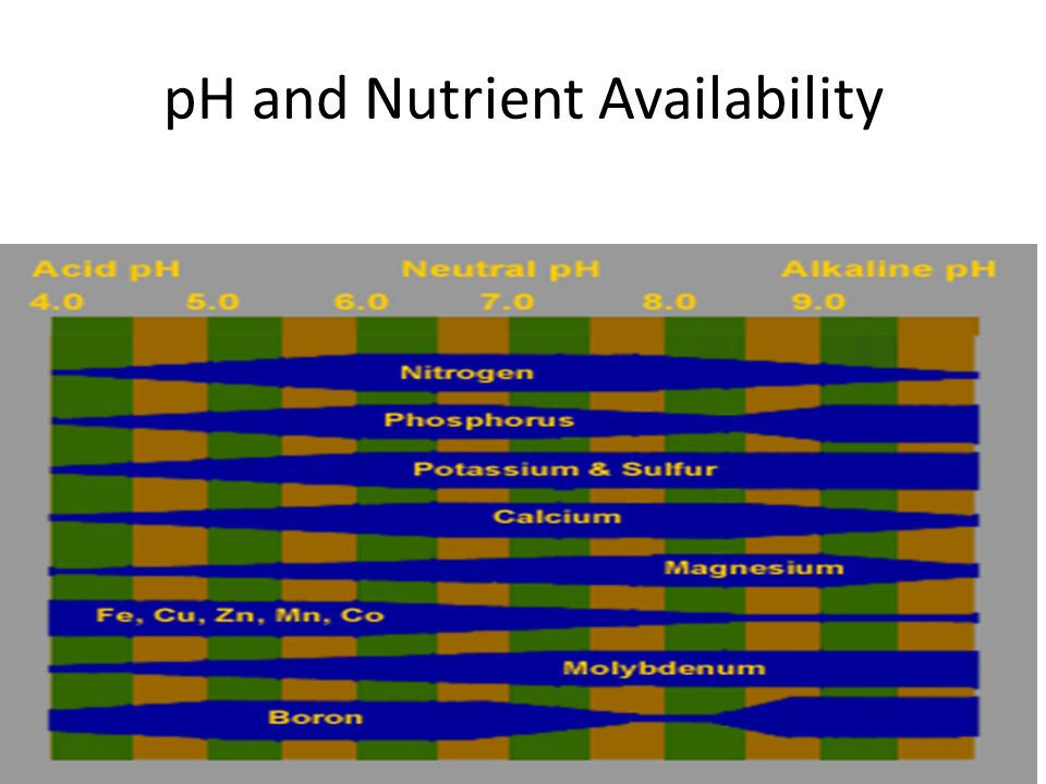 pH and Nutrient Availability