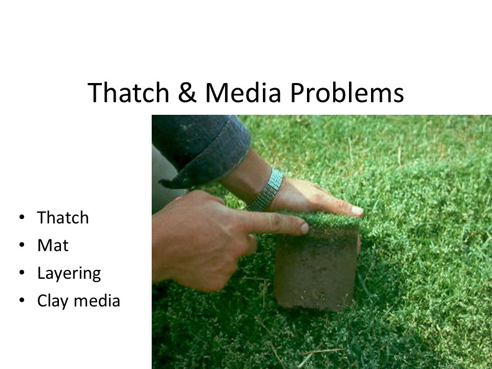 Thatch & Media Problems Thatch Mat Layering Clay media