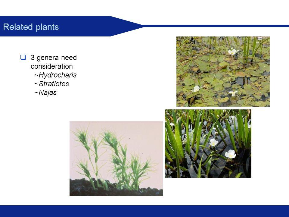 3 genera need consideration ~Hydrocharis ~Stratiotes ~Najas Related plants