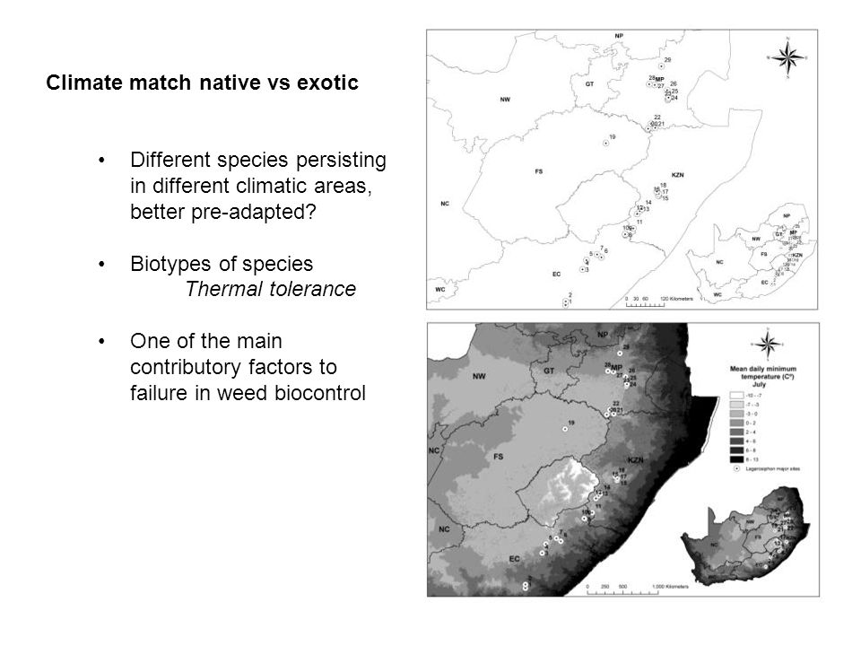 Climate match native vs exotic Different species persisting in different climatic areas, better pre-adapted? Biotypes of species Thermal tolerance One
