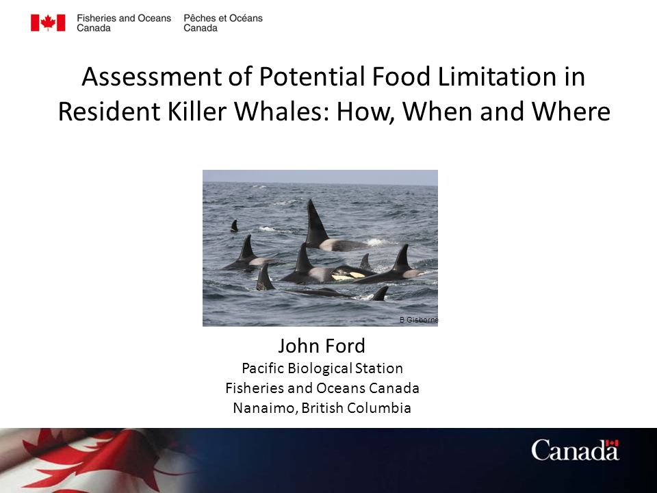 Assessment of Potential Food Limitation in Resident Killer Whales: How, When and Where John Ford Pacific Biological Station Fisheries and Oceans Canada Nanaimo, British Columbia B Gisborne