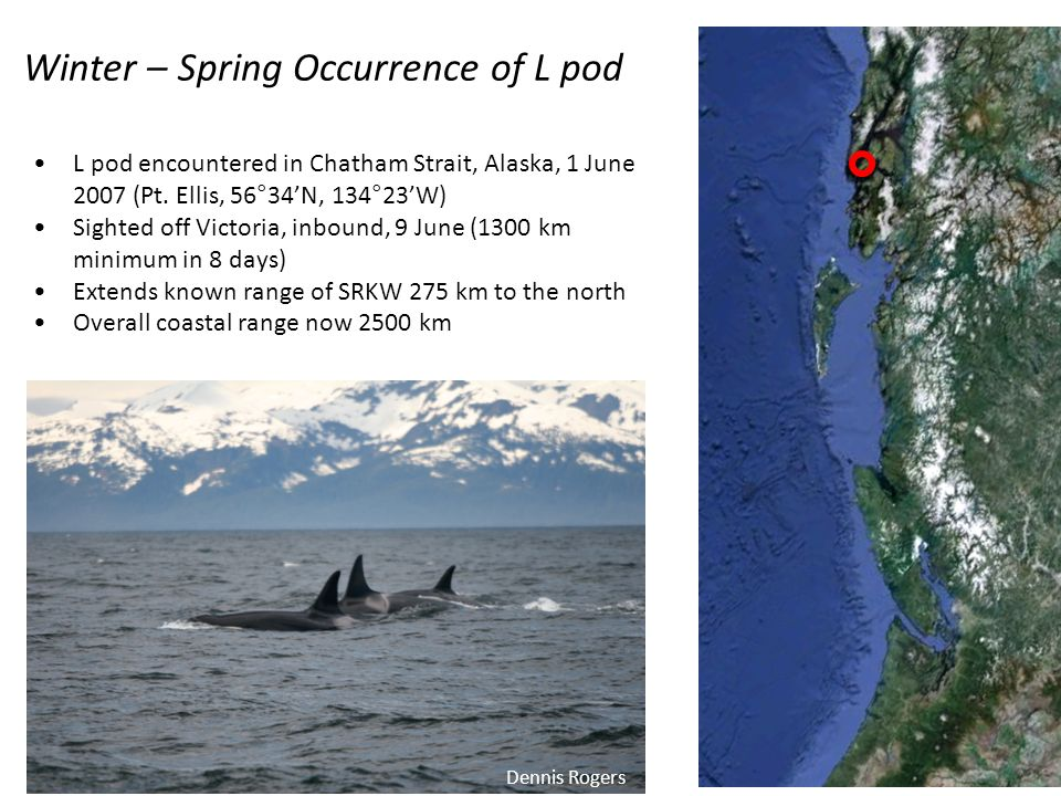 Winter – Spring Occurrence of L pod L pod encountered in Chatham Strait, Alaska, 1 June 2007 (Pt.