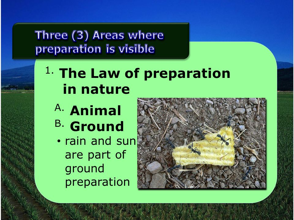 1. The Law of preparation in nature A. Animal B. Ground rain and sun are part of ground preparation