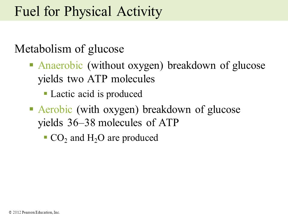 © 2012 Pearson Education, Inc. Fuel for Physical Activity Metabolism of glucose Anaerobic (without oxygen) breakdown of glucose yields two ATP molecul