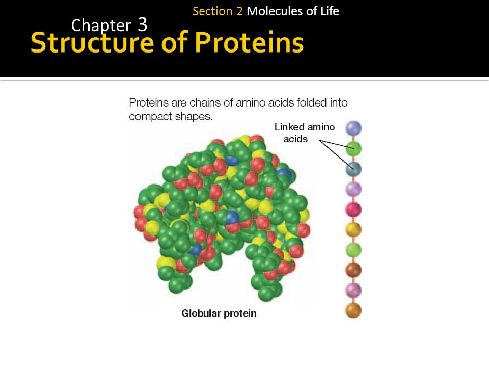 Chapter 3 Section 2 Molecules of Life