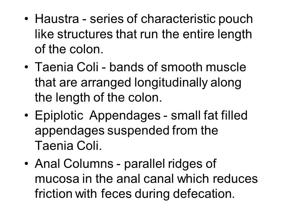 Large Intestine Histology