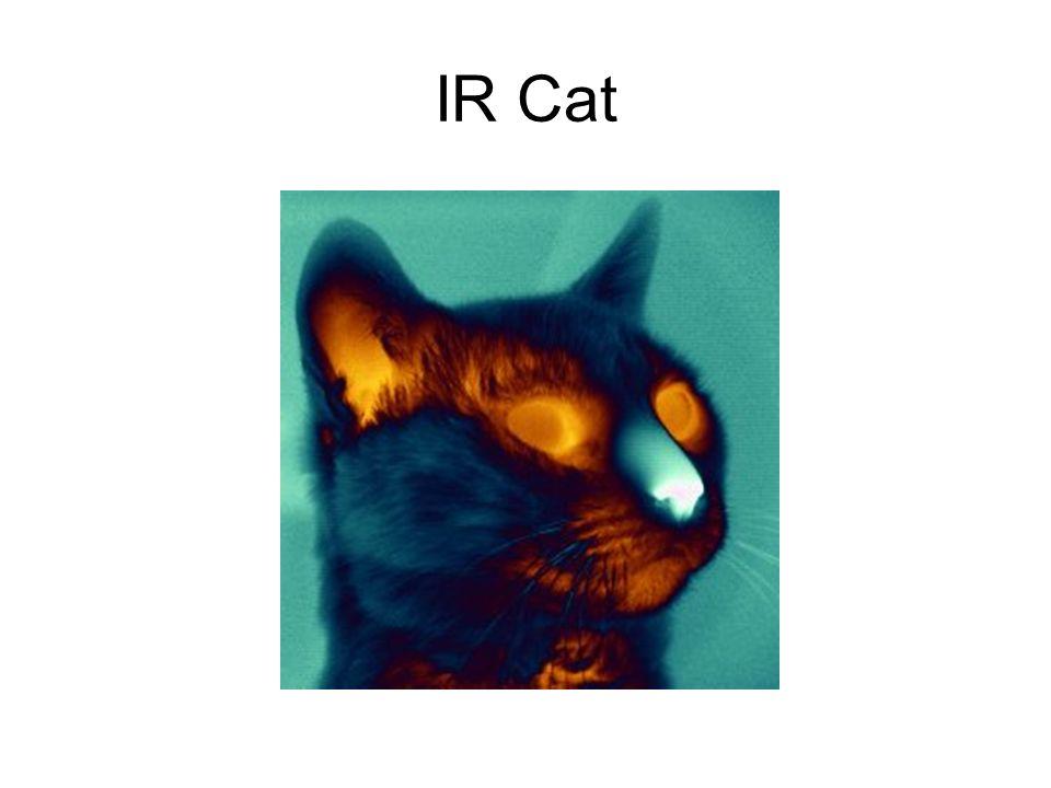 IR Cat