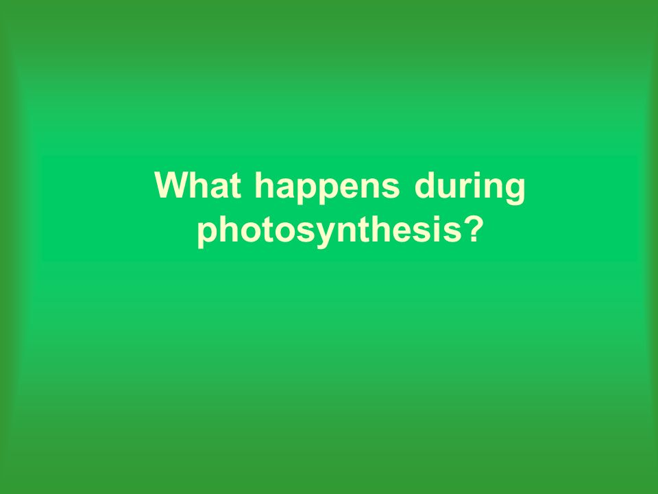 What happens during photosynthesis?