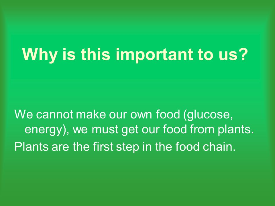 We cannot make our own food (glucose, energy), we must get our food from plants. Plants are the first step in the food chain.