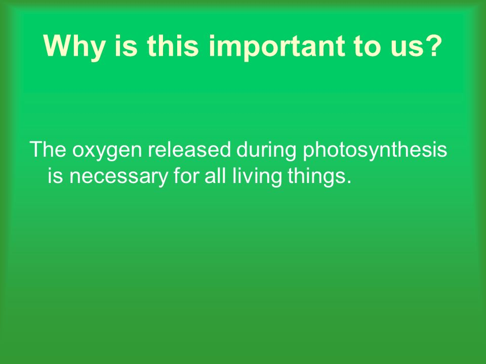 Why is this important to us? The oxygen released during photosynthesis is necessary for all living things.