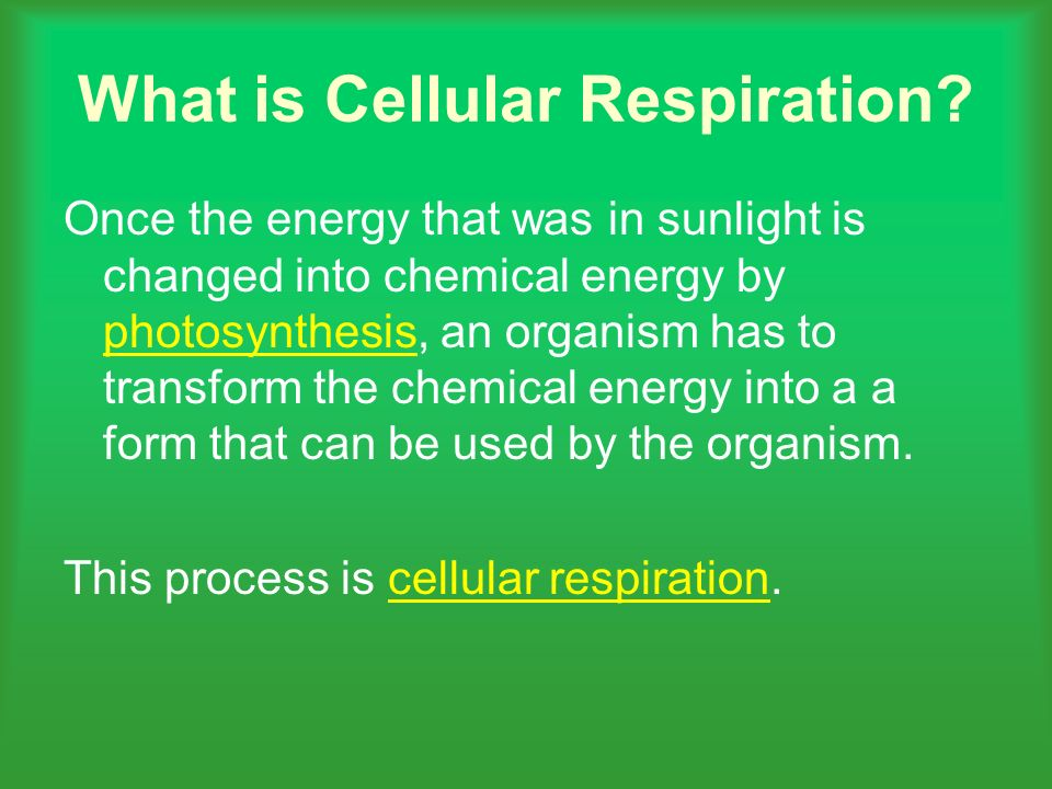 What is Cellular Respiration? Once the energy that was in sunlight is changed into chemical energy by photosynthesis, an organism has to transform the