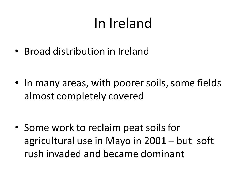 In Ireland Broad distribution in Ireland In many areas, with poorer soils, some fields almost completely covered Some work to reclaim peat soils for a