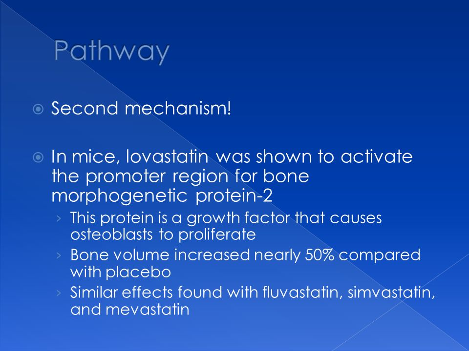 Second mechanism! In mice, lovastatin was shown to activate the promoter region for bone morphogenetic protein-2 This protein is a growth factor that