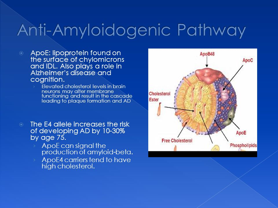 ApoE: lipoprotein found on the surface of chylomicrons and IDL.
