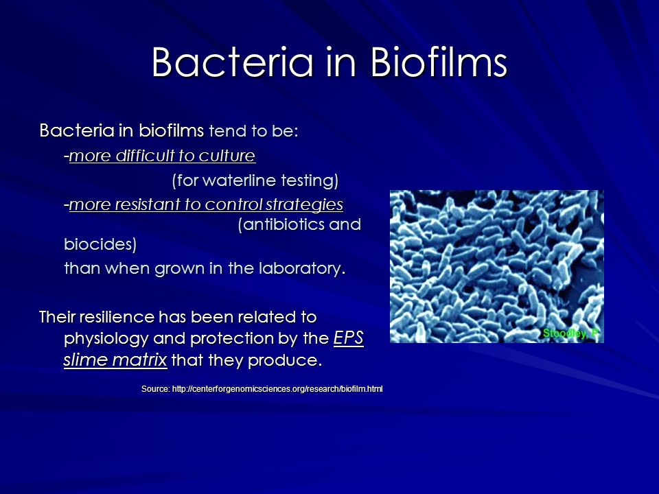 Bacteria in Biofilms Bacteria in biofilms tend to be: -more difficult to culture (for waterline testing) -more resistant to control strategies (antibi
