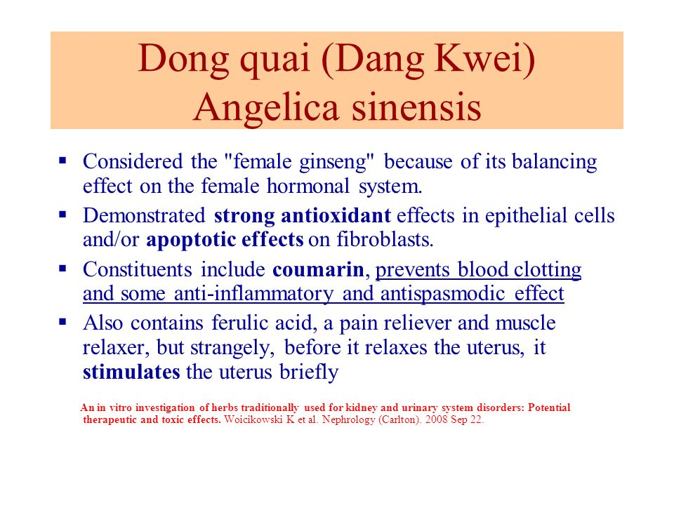 Dong quai (Dang Kwei) Angelica sinensis Considered the