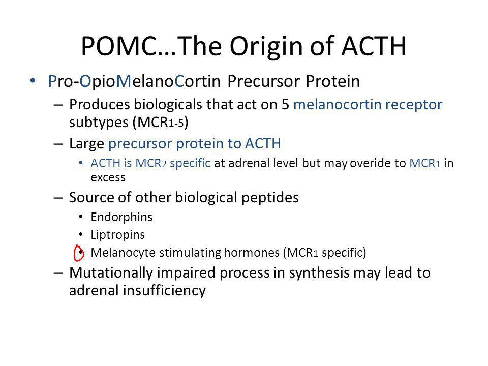 POMC…The Origin of ACTH Pro-OpioMelanoCortin Precursor Protein – Produces biologicals that act on 5 melanocortin receptor subtypes (MCR 1-5 ) – Large