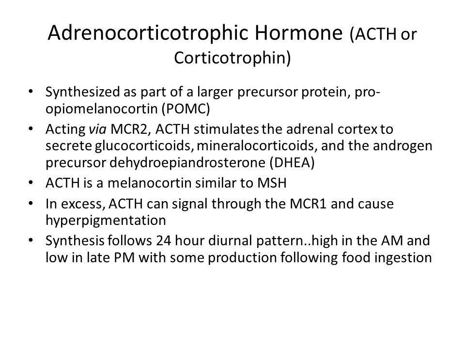 Adrenocorticotrophic Hormone (ACTH or Corticotrophin) Synthesized as part of a larger precursor protein, pro- opiomelanocortin (POMC) Acting via MCR2,