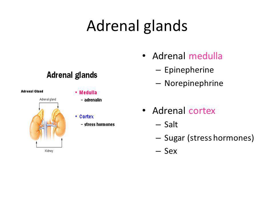 Adrenal Cortex SALT (mineralcorticoids) SUGAR (glucocorticoids)..aka Steroids SEX (gonadocorticoids)
