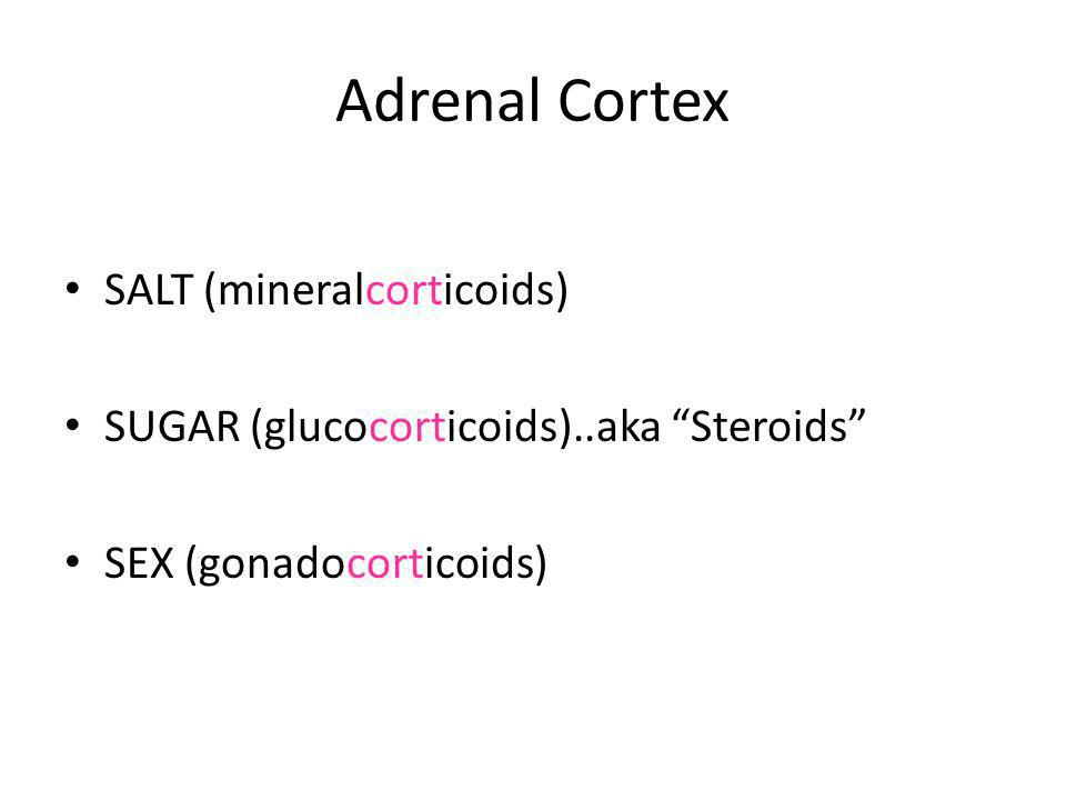 Major Functions of Adrenal Steroids Glucocorticoids – increases gluconeogenesis – increases glycogenesis – increases protein catabolism – decreases antibody response – antiinflammatory response – antineoplastic response Mineralocorticoids – increase sodium and water retention – promote potassium loss