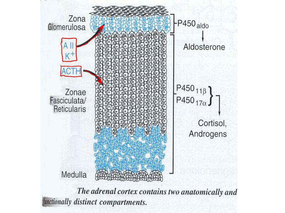 FLUDROCORTISONE A potent steroid with both glucocorticoid and mineralocorticoid activity.