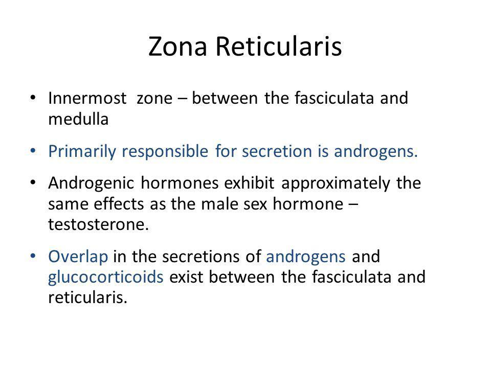 Zona Reticularis Innermost zone – between the fasciculata and medulla Primarily responsible for secretion is androgens. Androgenic hormones exhibit ap