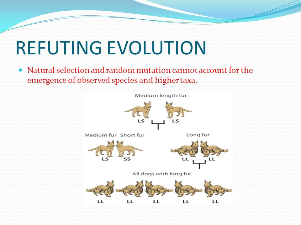 REFUTING EVOLUTION Natural selection and random mutation cannot account for the emergence of observed species and higher taxa.