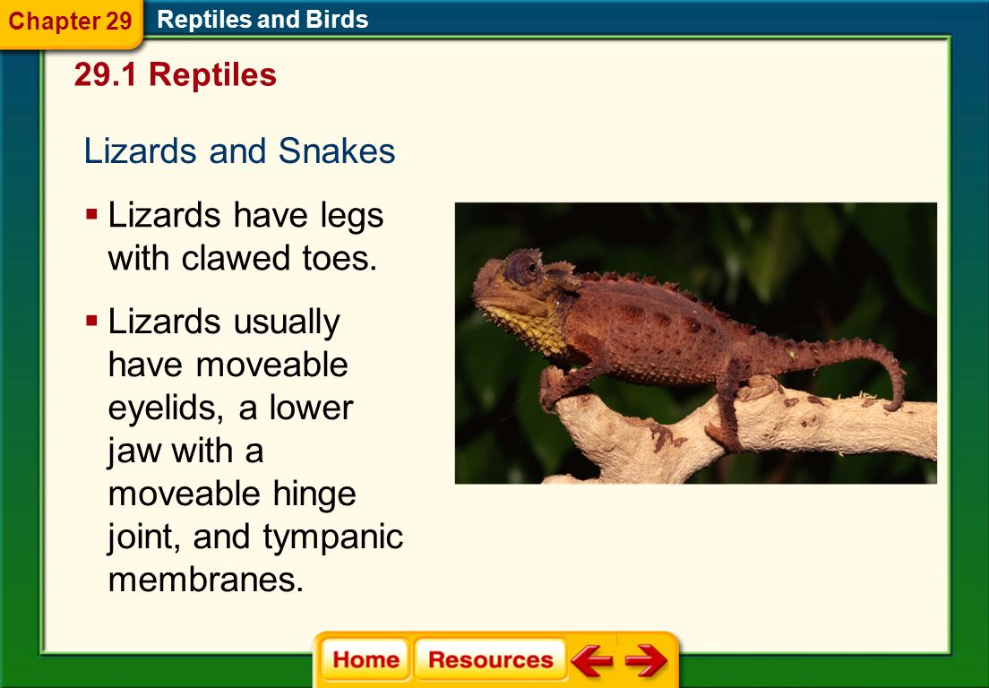 29.1 Reptiles Reptiles and Birds Chapter 29