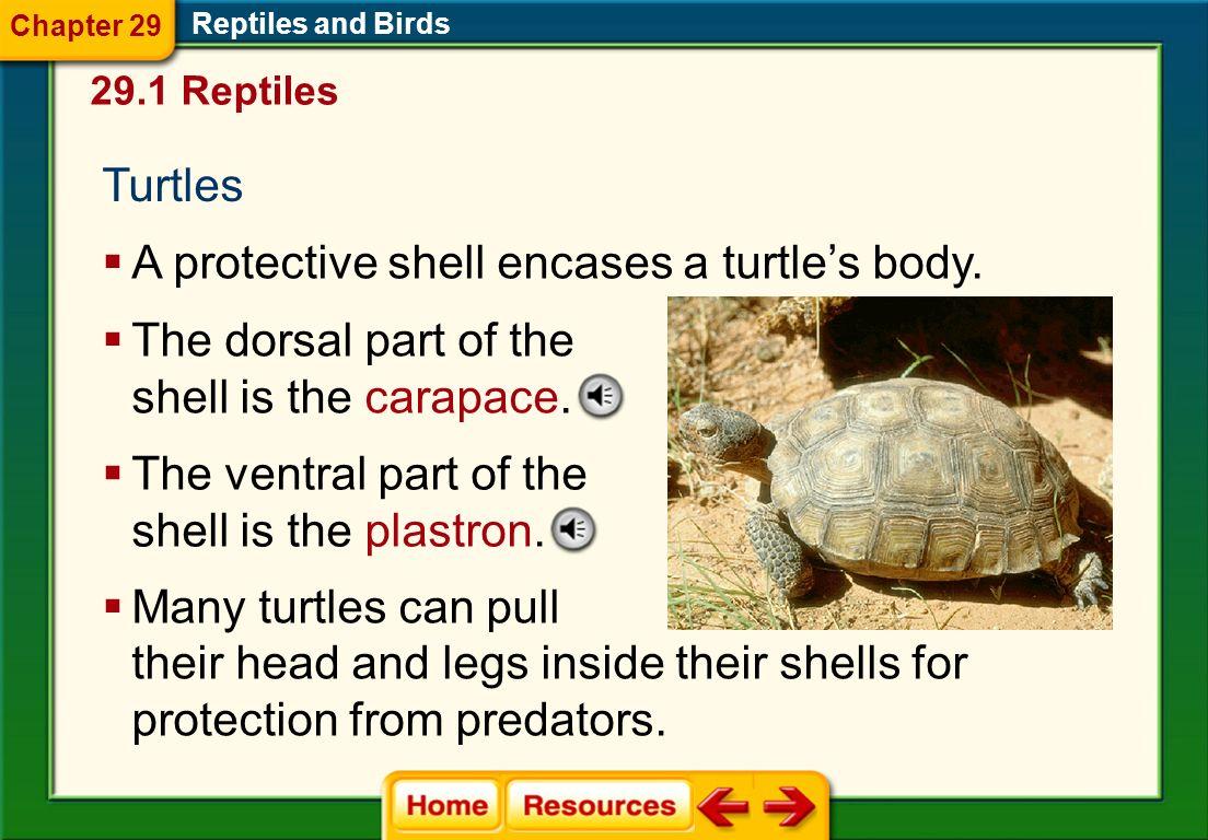 The Reptile  Wikipedia