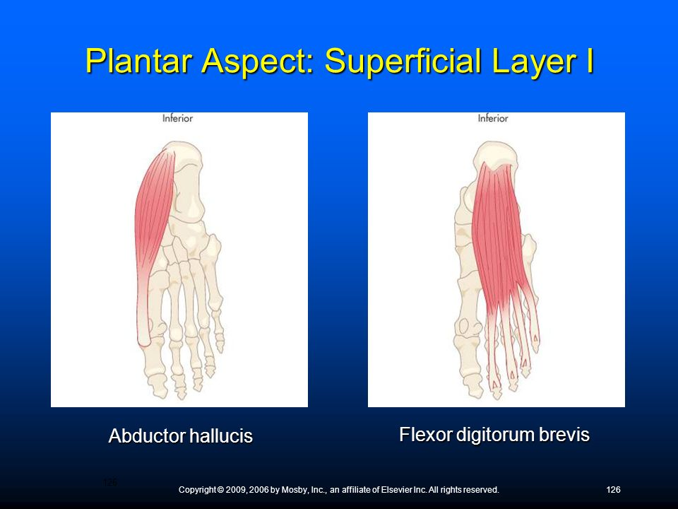 Copyright © 2009, 2006 by Mosby, Inc., an affiliate of Elsevier Inc. All rights reserved.126 Abductor hallucis Flexor digitorum brevis Plantar Aspect:
