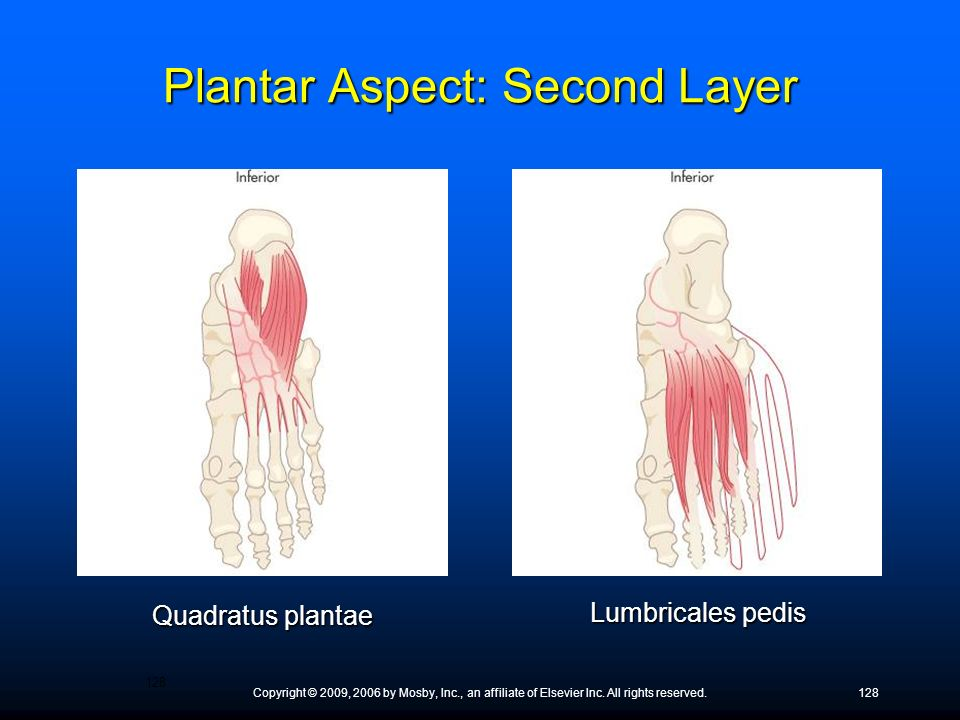 Copyright © 2009, 2006 by Mosby, Inc., an affiliate of Elsevier Inc. All rights reserved.128 Quadratus plantae Lumbricales pedis Plantar Aspect: Secon