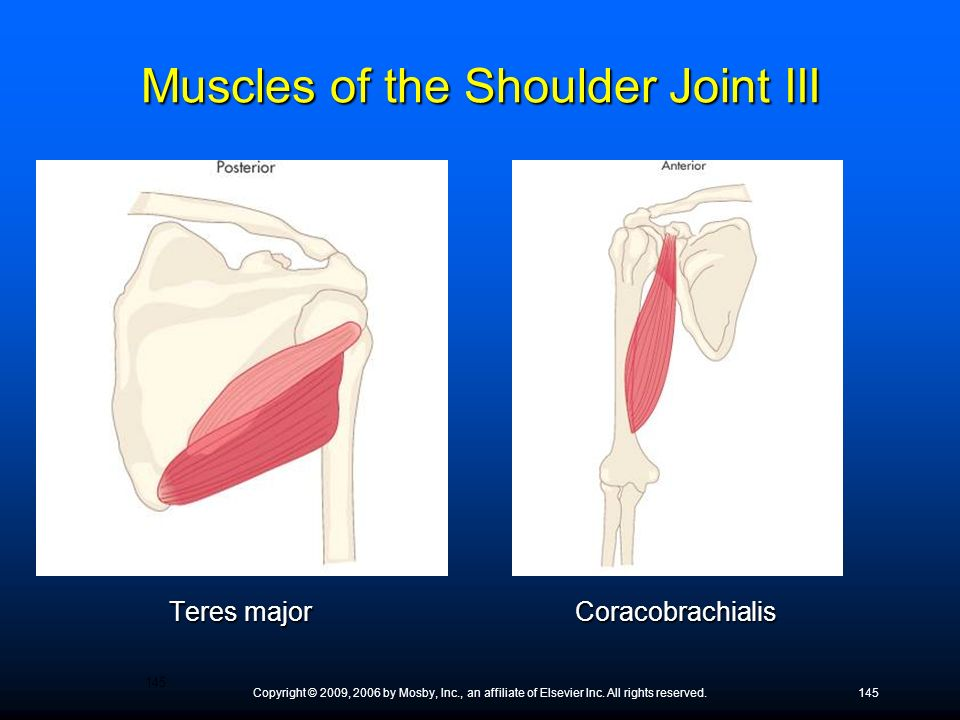 Copyright © 2009, 2006 by Mosby, Inc., an affiliate of Elsevier Inc. All rights reserved.145 Teres major Coracobrachialis Muscles of the Shoulder Join