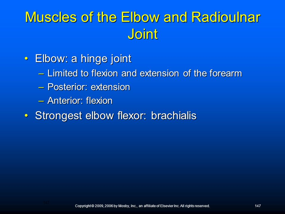 Copyright © 2009, 2006 by Mosby, Inc., an affiliate of Elsevier Inc. All rights reserved.147 Muscles of the Elbow and Radioulnar Joint Elbow: a hinge