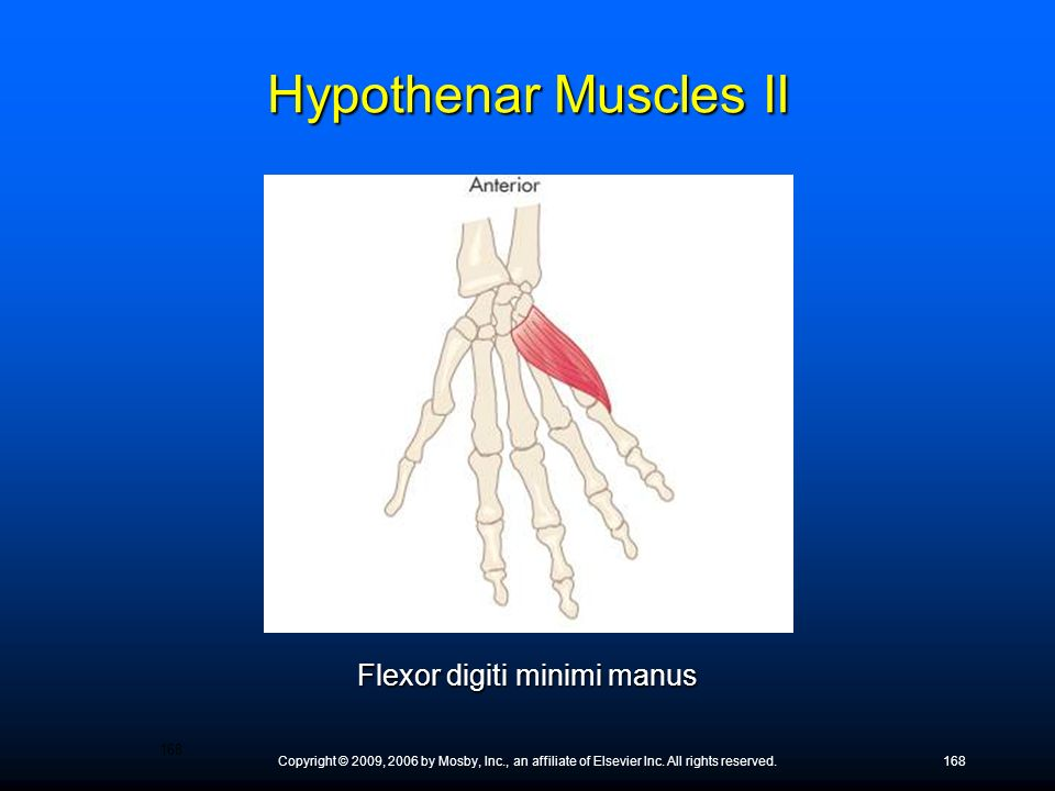 Copyright © 2009, 2006 by Mosby, Inc., an affiliate of Elsevier Inc. All rights reserved.168 Flexor digiti minimi manus Hypothenar Muscles II