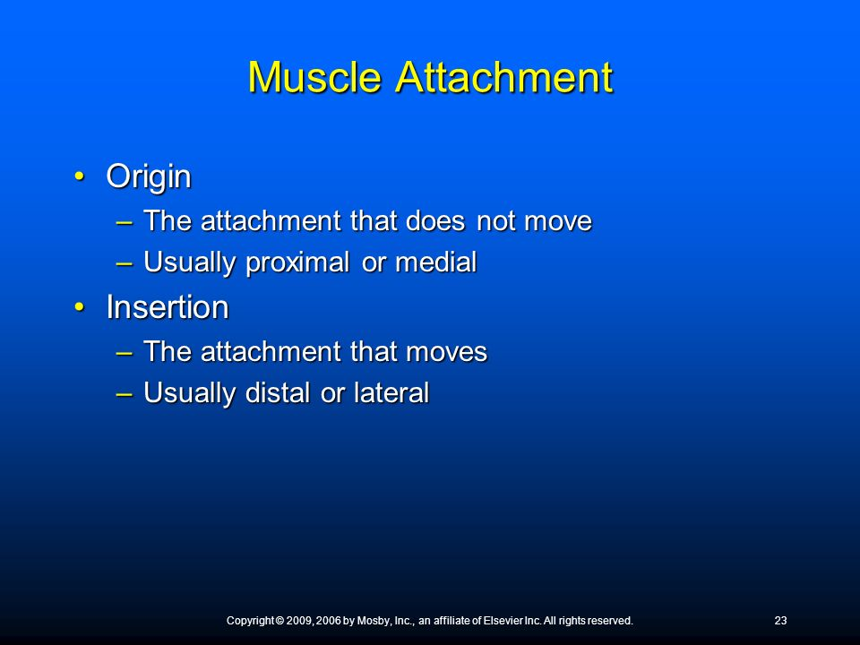 Muscle Attachment OriginOrigin –The attachment that does not move –Usually proximal or medial InsertionInsertion –The attachment that moves –Usually d