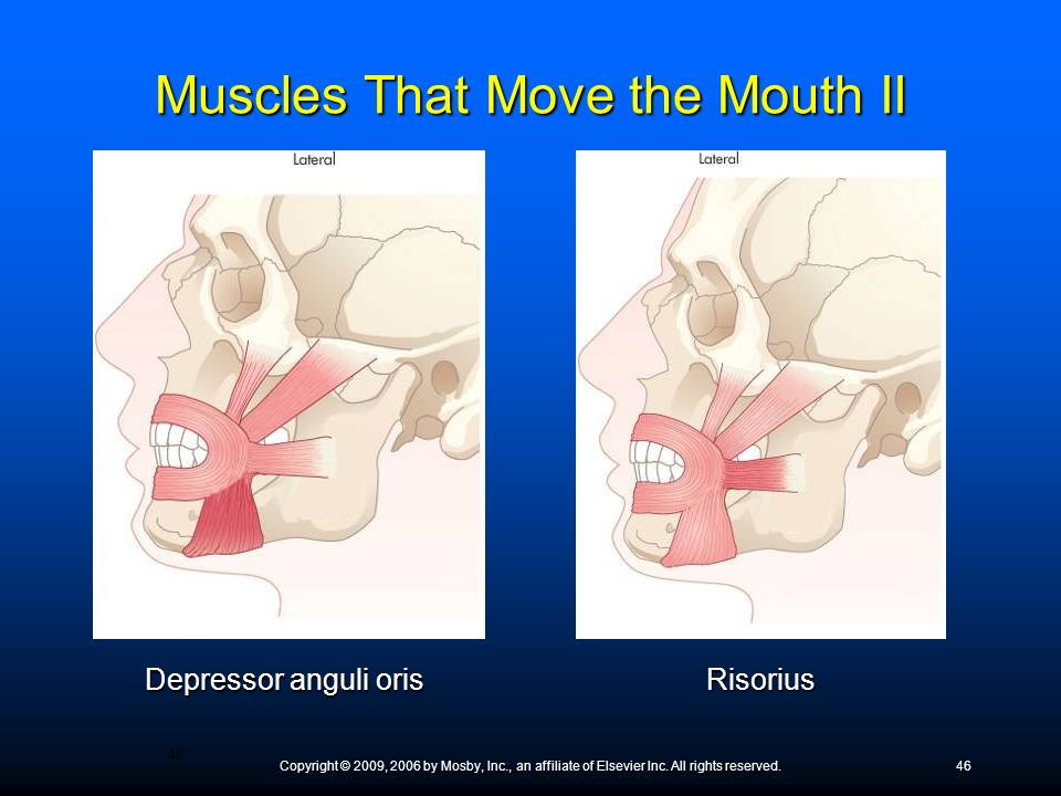 Copyright © 2009, 2006 by Mosby, Inc., an affiliate of Elsevier Inc. All rights reserved.46 Depressor anguli oris Risorius Muscles That Move the Mouth