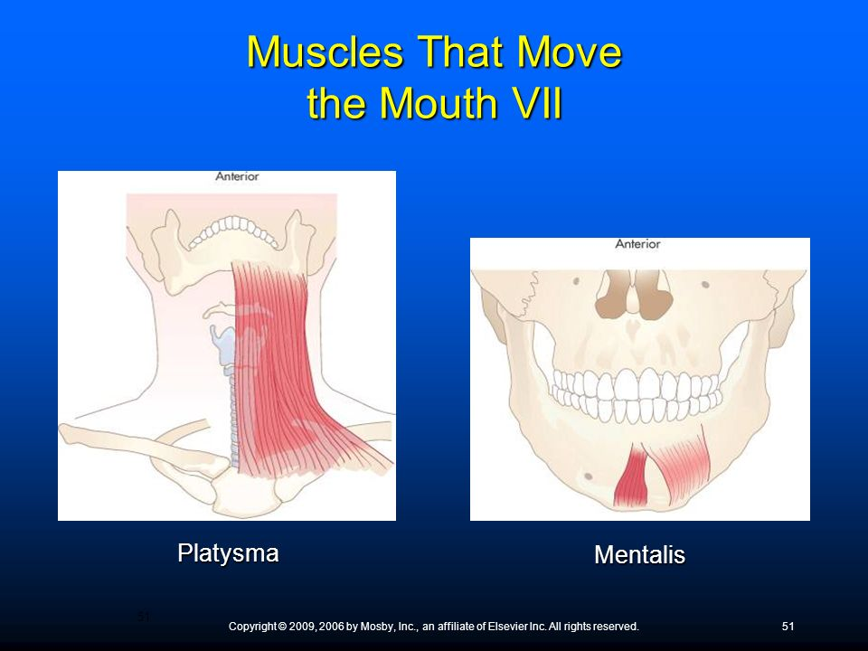 Copyright © 2009, 2006 by Mosby, Inc., an affiliate of Elsevier Inc. All rights reserved.51 Platysma Mentalis Muscles That Move the Mouth VII