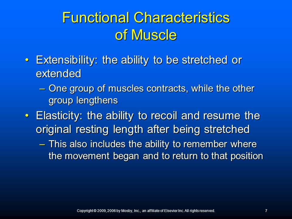 Functional Characteristics of Muscle Extensibility: the ability to be stretched or extendedExtensibility: the ability to be stretched or extended –One