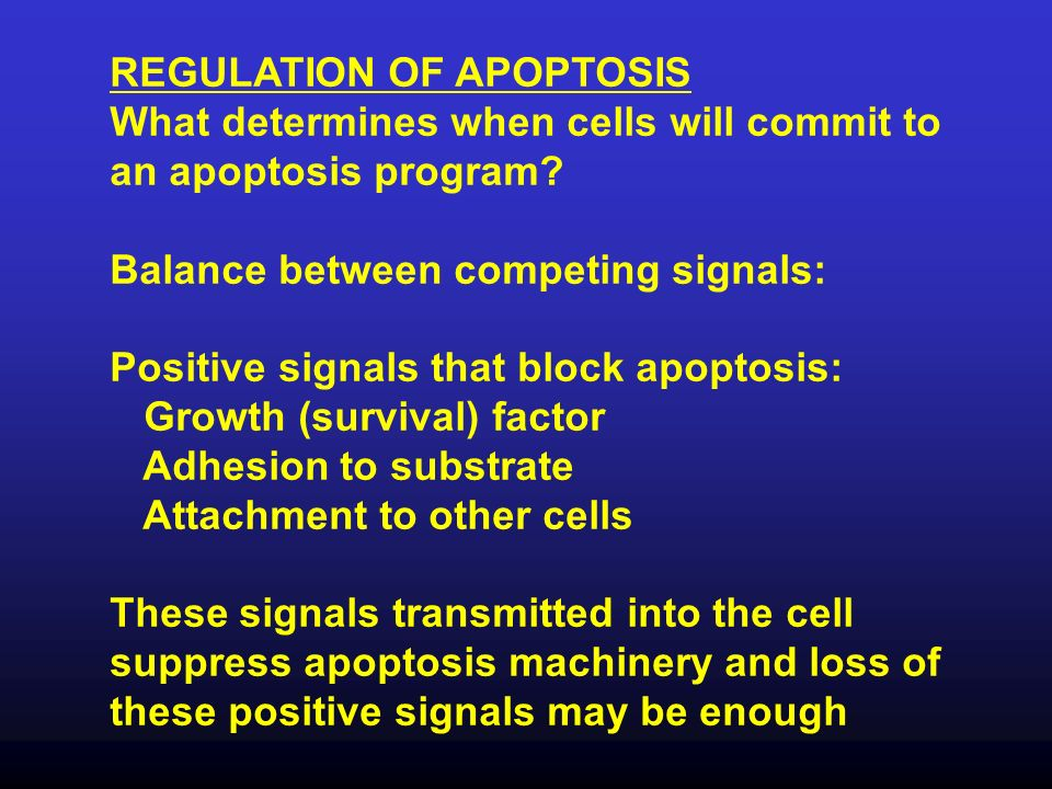 REGULATION OF APOPTOSIS What determines when cells will commit to an apoptosis program? Balance between competing signals: Positive signals that block