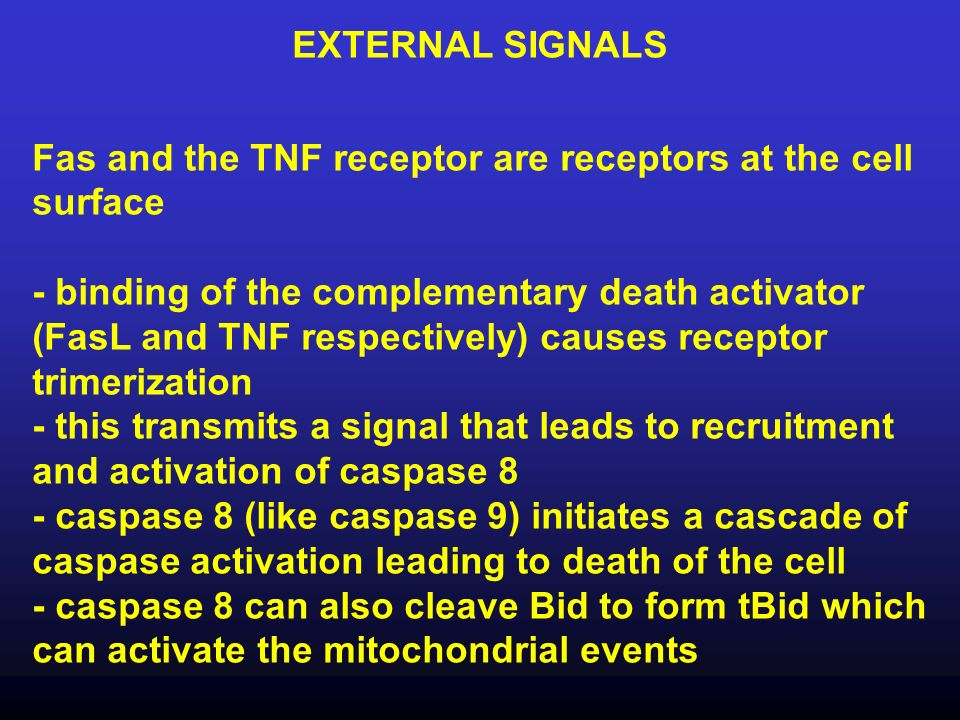 EXTERNAL SIGNALS Fas and the TNF receptor are receptors at the cell surface - binding of the complementary death activator (FasL and TNF respectively)