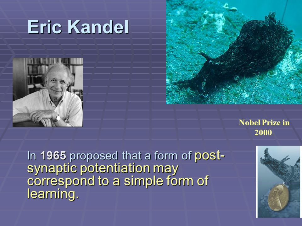 Eric Kandel Nobel Prize in 2000. In 1965 proposed that a form of post- synaptic potentiation may correspond to a simple form of learning.