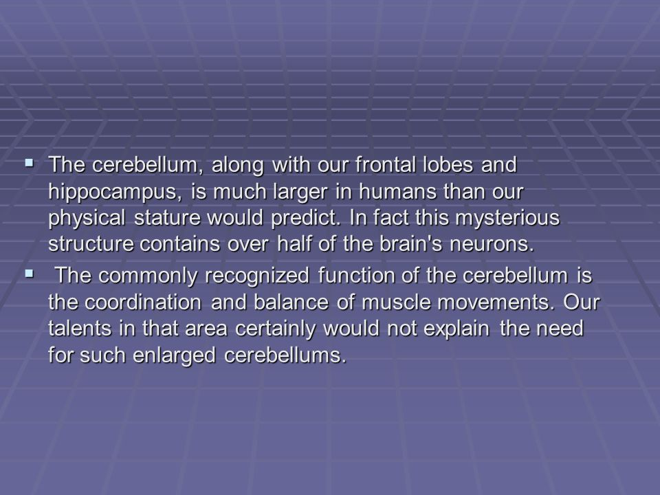 The cerebellum, along with our frontal lobes and hippocampus, is much larger in humans than our physical stature would predict.