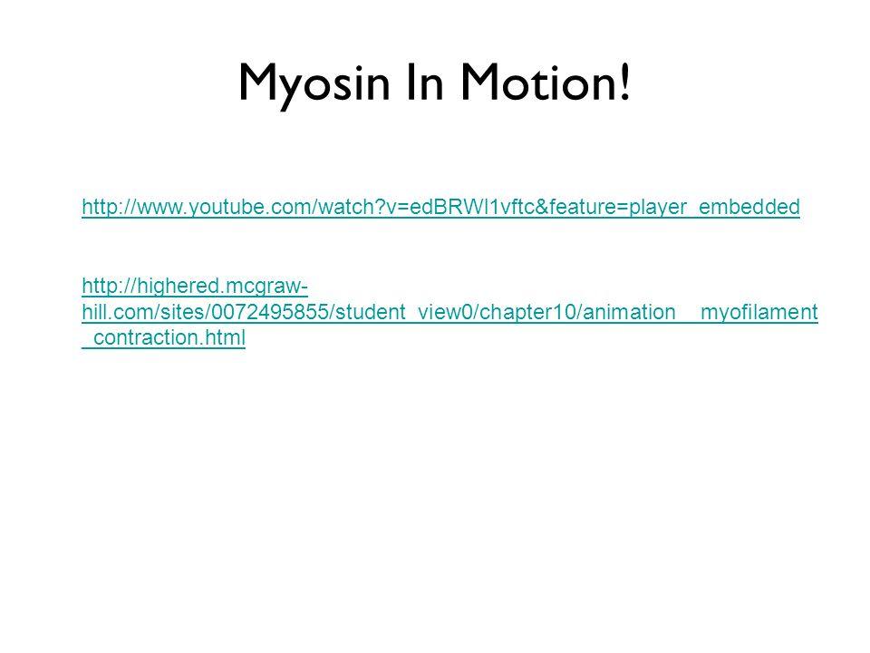 Myosin In Motion.