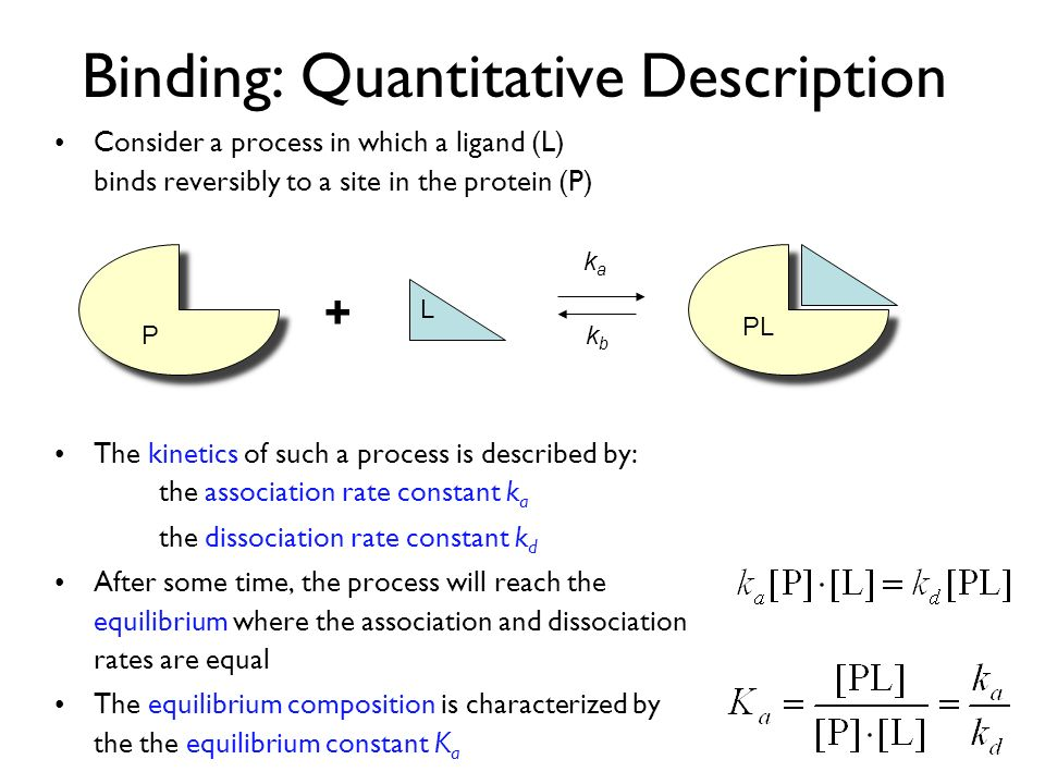 Binding: Quantitative Description Consider a process in which a ligand (L) binds reversibly to a site in the protein (P) The kinetics of such a process is described by: the association rate constant k a the dissociation rate constant k d After some time, the process will reach the equilibrium where the association and dissociation rates are equal The equilibrium composition is characterized by the the equilibrium constant K a + kaka kbkb PL P L