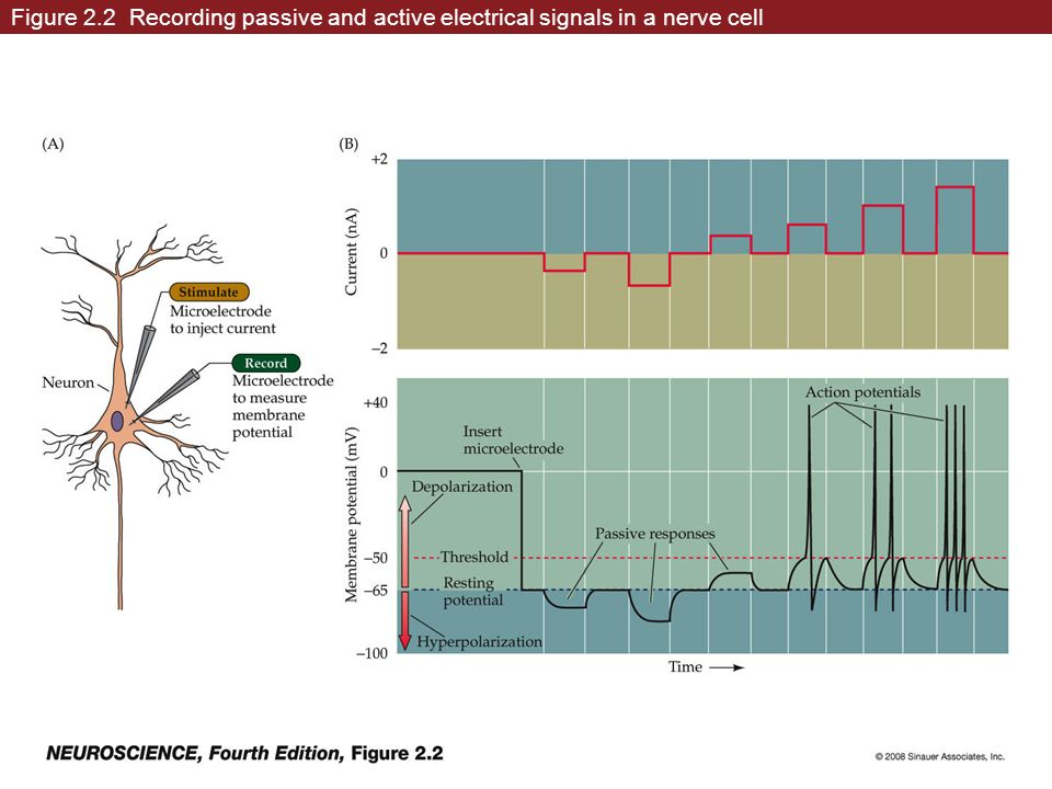 Figure 2.2 Recording passive and active electrical signals in a nerve cell