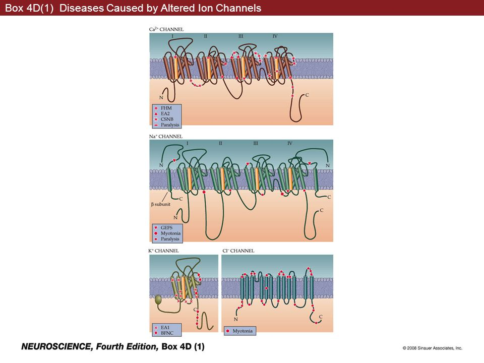 Box 4D(1) Diseases Caused by Altered Ion Channels