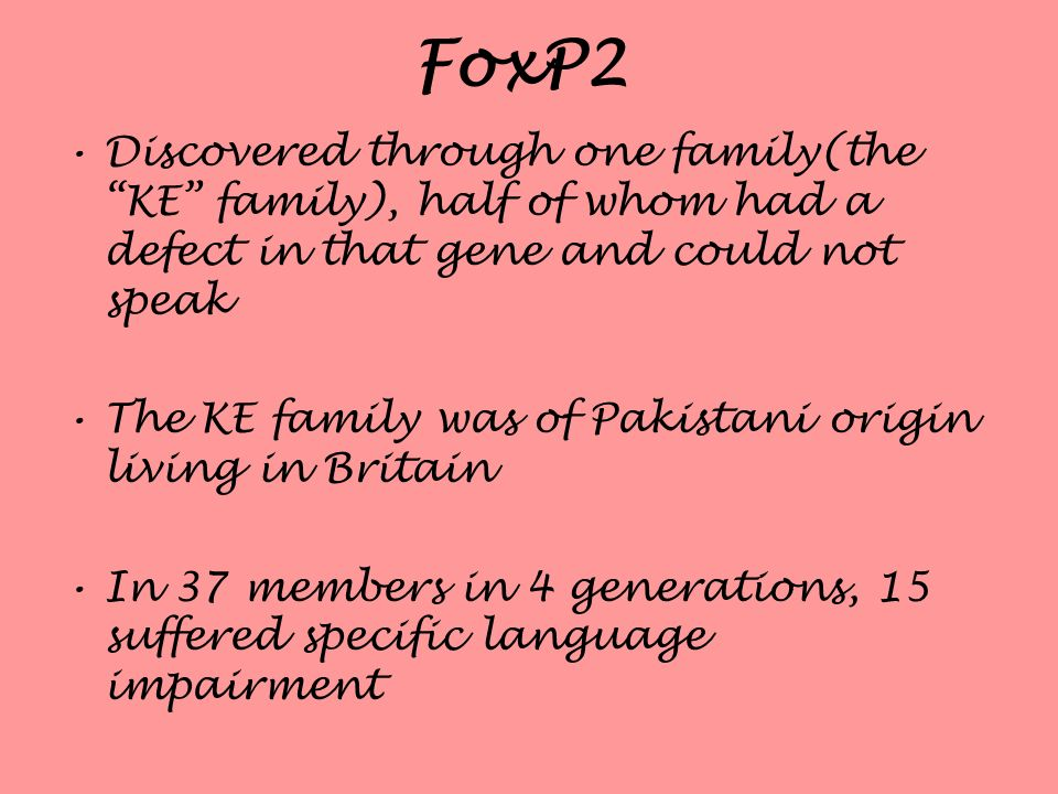 FoxP2 Discovered through one family(the KE family), half of whom had a defect in that gene and could not speak The KE family was of Pakistani origin l