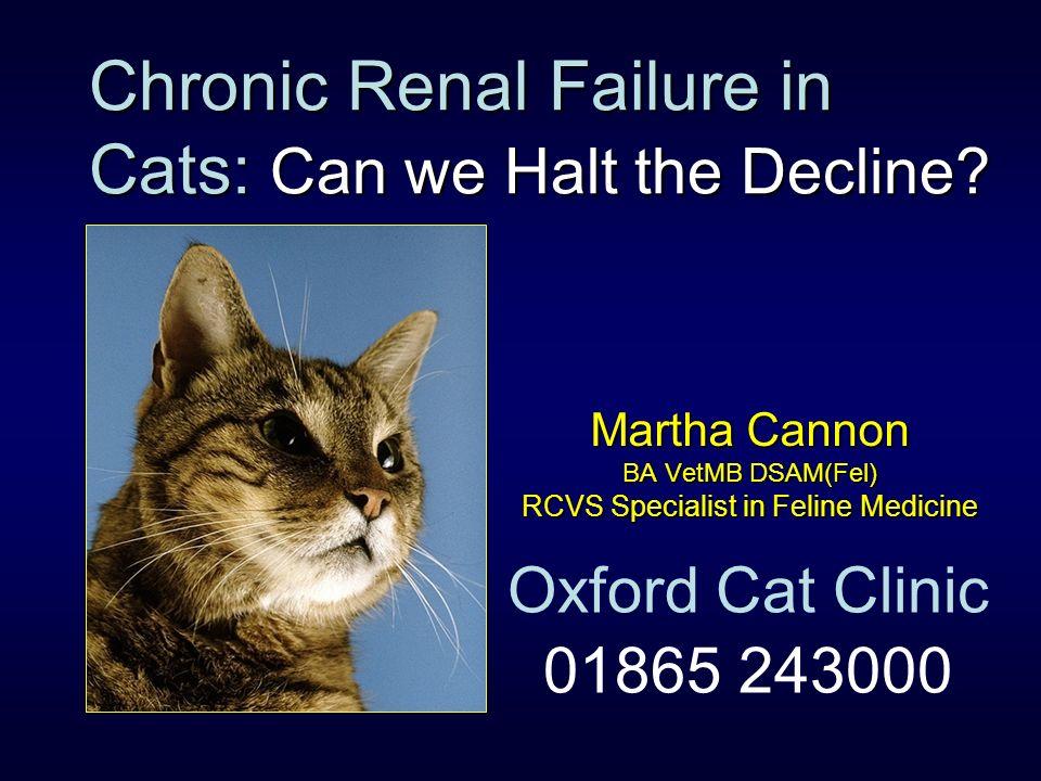 Chronic Renal Failure in Cats: Can we Halt the Decline? Martha Cannon BA VetMB DSAM(Fel) RCVS Specialist in Feline Medicine Oxford Cat Clinic 01865 24