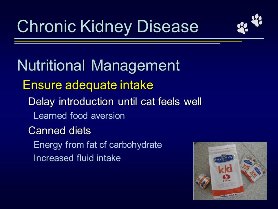 Chronic Kidney Disease Nutritional Management Ensure adequate intake Delay introduction until cat feels well Learned food aversion Canned diets Energy