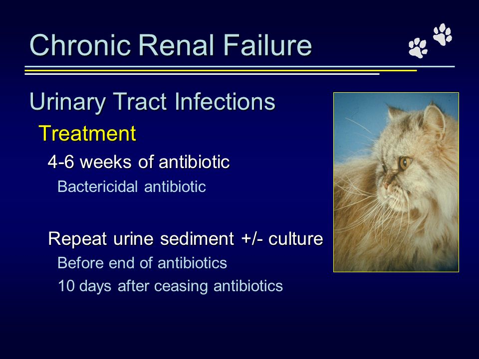 Chronic Renal Failure Urinary Tract Infections Treatment 4-6 weeks of antibiotic Bactericidal antibiotic Repeat urine sediment +/- culture Before end